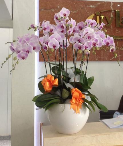 Phong cách của  hoa lan hồ điệp